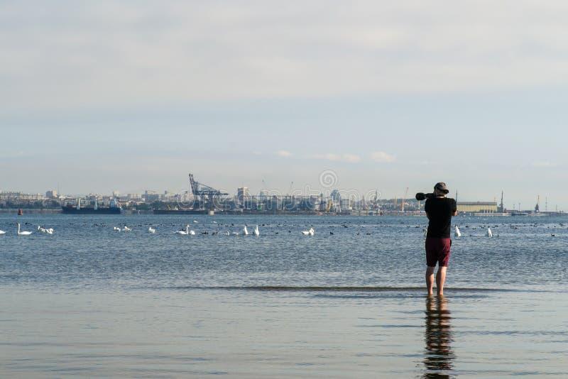 Fotograf som tar bilder av en grupp av svanar arkivbilder