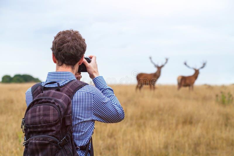 Fotograf som tar fotoet av djurliv royaltyfri foto