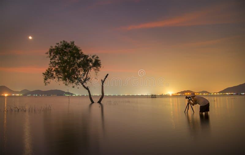Fotograf tak ett ensamt vid liv träd för foto royaltyfri fotografi