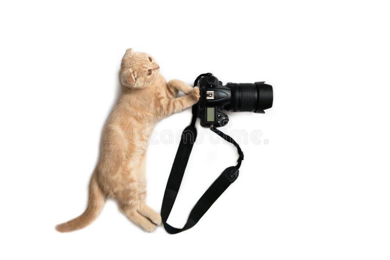 Fotografa poj?cia karta ?liczny kot z kamer? bierze fotografi? odizolowywaj?c? na bia?ym tle ?wiatowy fotografia dzie? zdjęcie royalty free