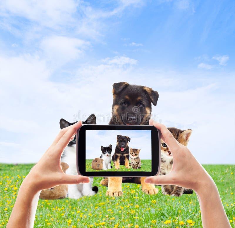 Fotografando o smartphone dos animais de estimação fotos de stock