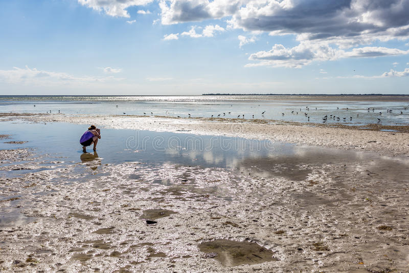 Fotografando pássaros na praia fotografia de stock