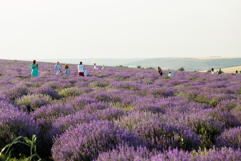 Fotografen en model die op lavendelgebied werken royalty-vrije stock foto's