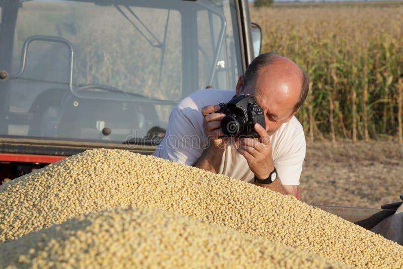 fotografera för skörd arkivfoton