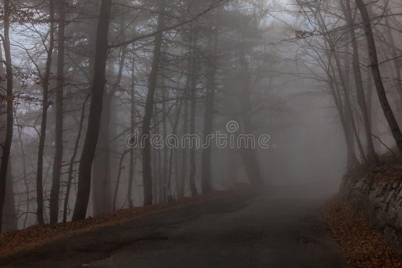 Fotograferat i skogen i Krim arkivfoton