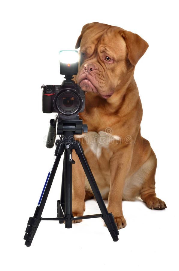 Fotografhund mit Kamera stockbild