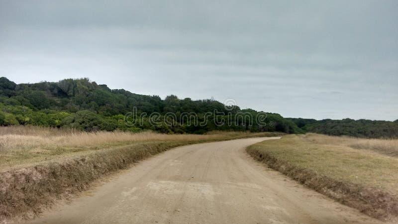 Fotografi av den Miramar skogen Argentina fotografering för bildbyråer