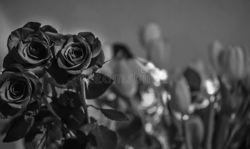 Fotografi av rosor i svartvitt royaltyfri fotografi
