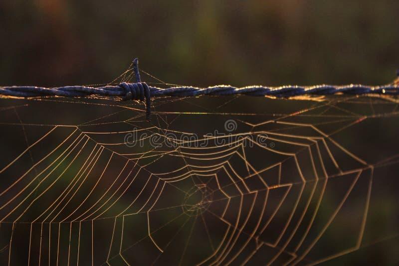 Fotografi för Spiderweb makronatur av en spindelrengöringsduk på försedd med en hulling - tråd royaltyfri fotografi
