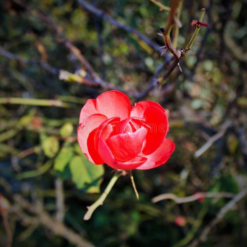 fotografi som beskriver det moget, som uttrycker sig in sköt som tar en enslig blomma royaltyfri fotografi