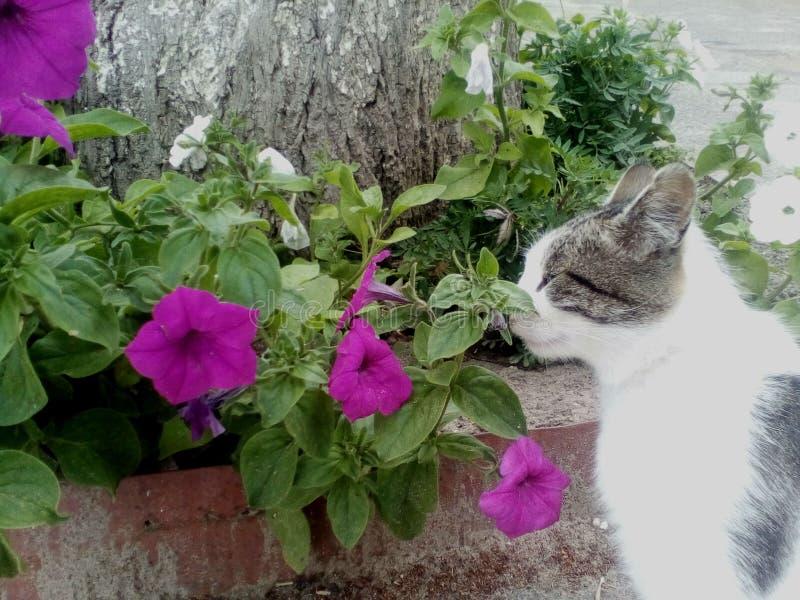 Fotografia «Jaki cudowną woń te kwiaty « zdjęcie stock