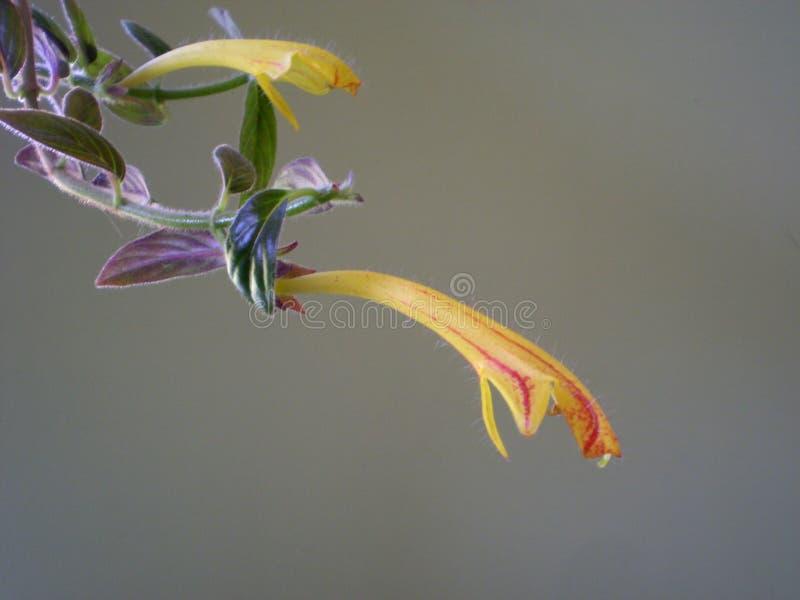 Fotografia żółty kwiat na zamazanym popielatym tle fotografia stock