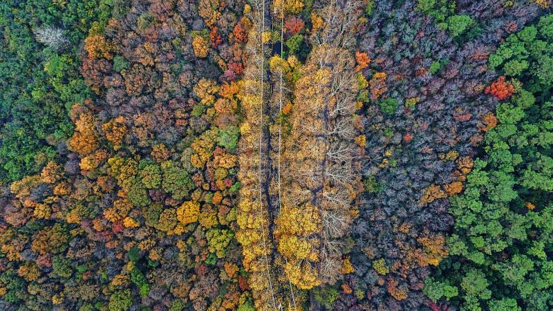 Fotografia aérea - cenário do outono do jardim botânico fotos de stock royalty free