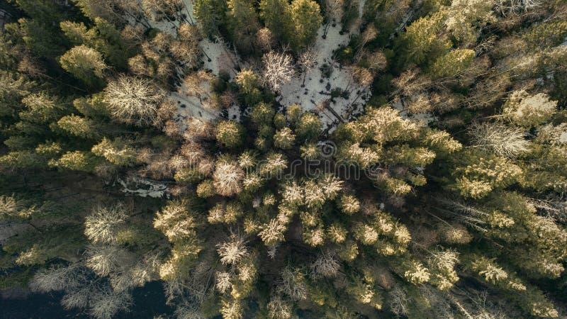 Fotografia aerea di una foresta nell'inverno fotografie stock