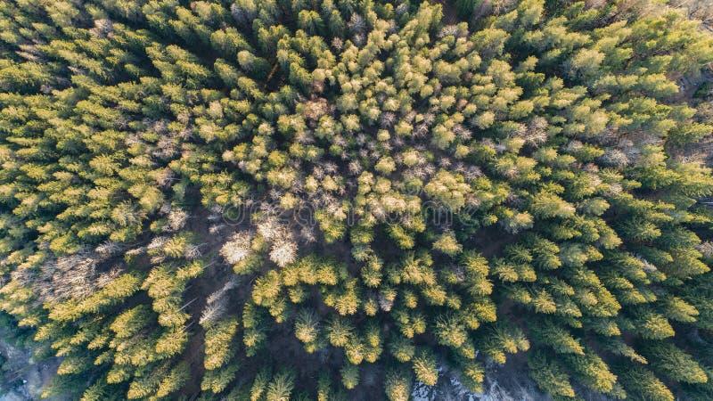 Fotografia aerea di una foresta nell'inverno immagini stock libere da diritti