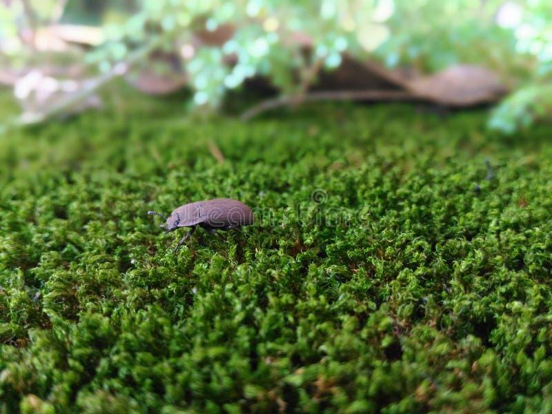 Fotografia al suolo della natura di sera tardi dell'insetto immagini stock libere da diritti