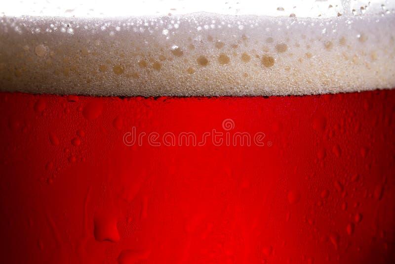 Fotografia alta vicina dello studio della birra alla luce posteriore fotografia stock