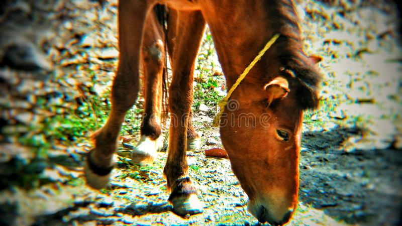 Fotografia animal fotos de stock royalty free