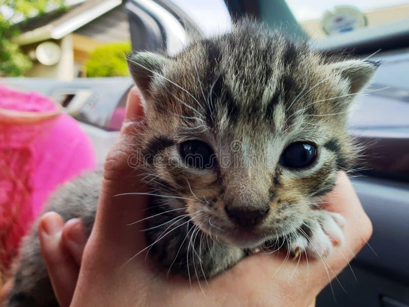 Fotografia aproximada de Brown e Kitten Preto de Pele Curto foto de stock