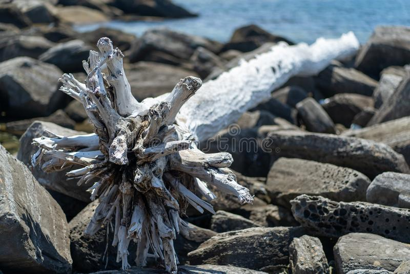 Fotografia biały wysuszony wyrzucać na brzeg drzewo przeciw skałom obraz stock