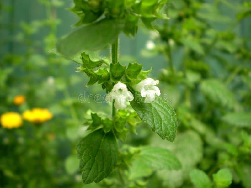 Fotografia biali kwiaty na zamazanym zielonym tle obraz stock