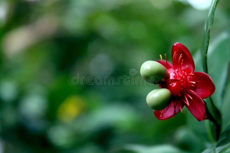 Fotografia brać od mój ogródu, roślina z pięknymi liśćmi obrazy stock