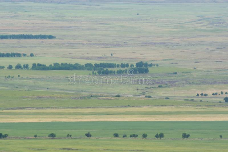 Fotografia brać od wzrosta zielone drzewa w warunkach polowych Natura obraz stock