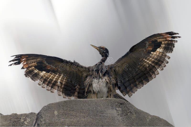 Fotografia a colori di un uccello fotografie stock libere da diritti
