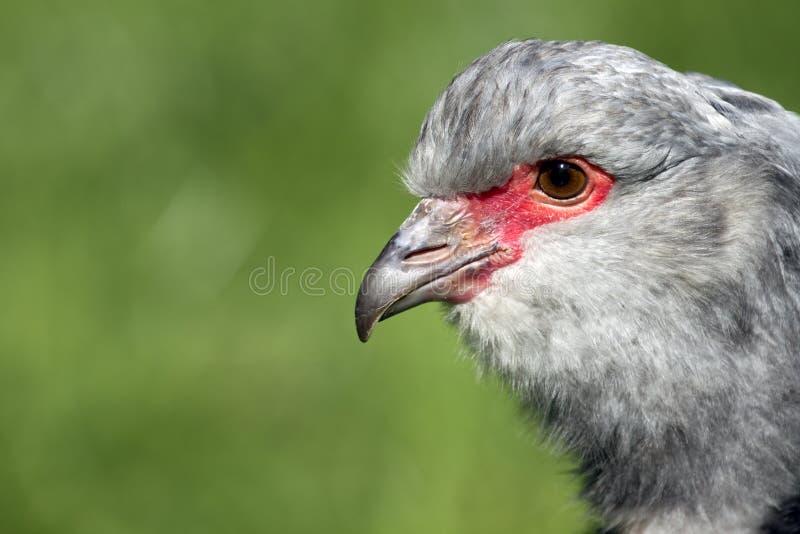 Fotografia a colori di un uccello immagine stock