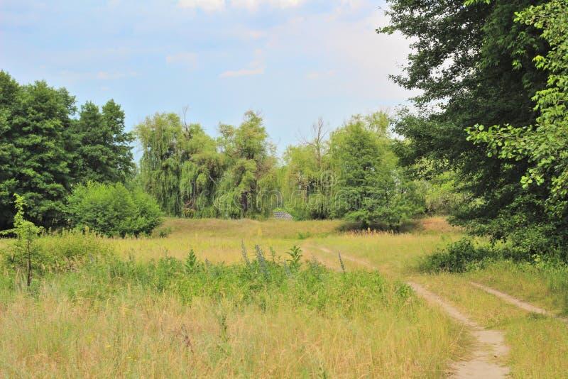 Fotografia da paisagem da grama verde e dos salgueiros no fundo contra um céu azul Estrada secundária no primeiro plano imagens de stock
