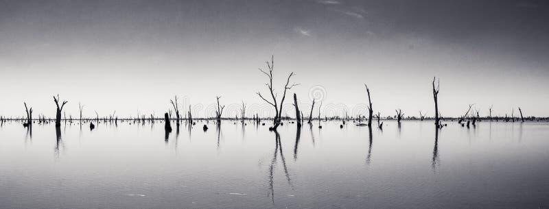 Fotografia dei tronchi di albero morti che attaccano dall'acqua, Australia immagini stock
