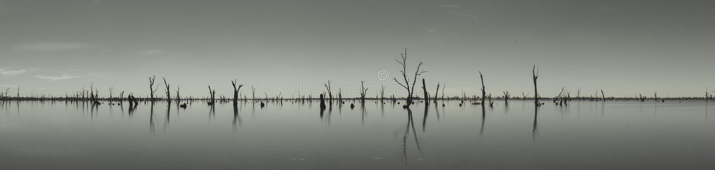 Fotografia dei tronchi di albero morti che attaccano dall'acqua, Australia fotografia stock