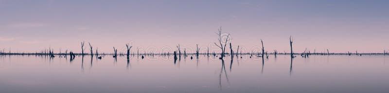 Fotografia dei tronchi di albero morti che attaccano dall'acqua, Australia immagine stock libera da diritti