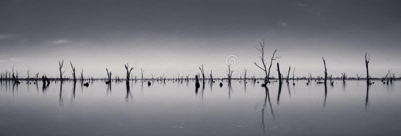 Fotografia dei tronchi di albero morti che attaccano dall'acqua, Australia immagine stock