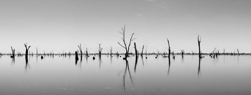 Fotografia dei tronchi di albero morti che attaccano dall'acqua, Australia fotografia stock libera da diritti