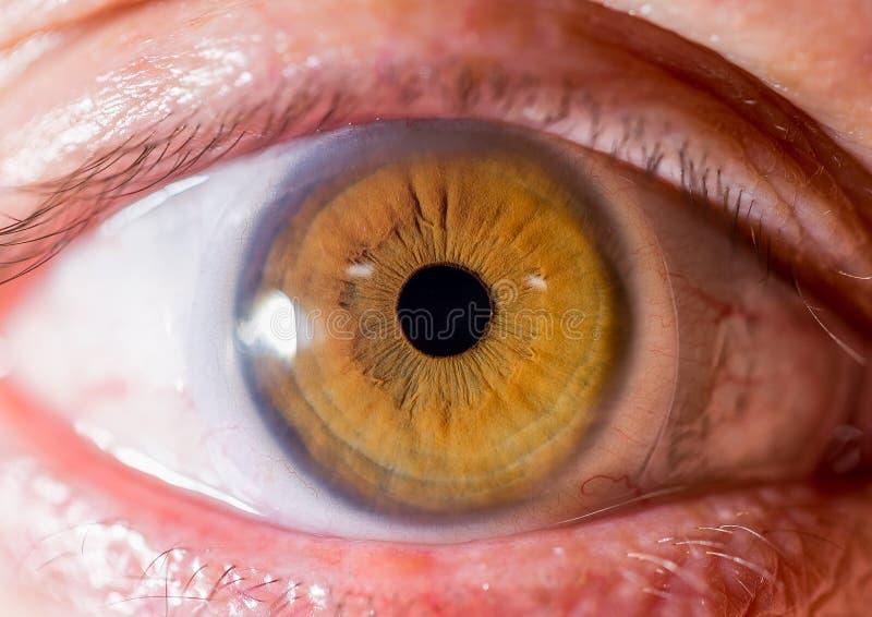 Fotografia dell'iride Macro colpo vicino di un bulbo oculare Ambrato o marrone con le creste fotografie stock libere da diritti