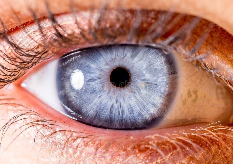 Fotografia dell'iride Macro colpo vicino di un bulbo oculare Blu vivo fotografia stock libera da diritti