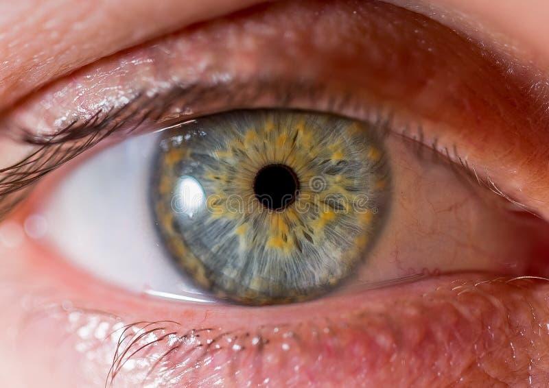 Fotografia dell'iride Macro colpo vicino di un bulbo oculare Verde e colore giallo fotografia stock libera da diritti