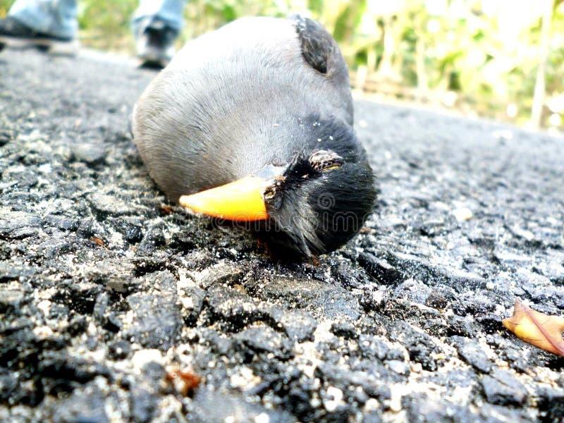 Fotografia dell'uccello fotografia stock