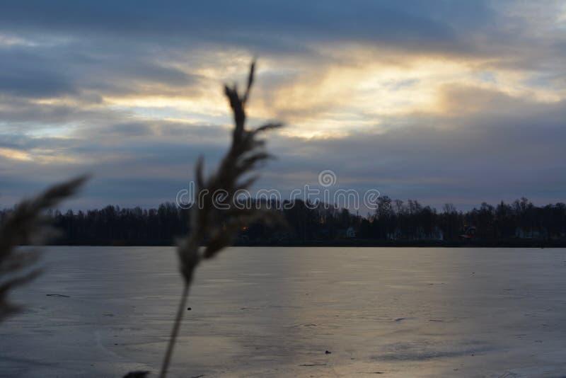 Fotografia della natura in Svezia immagine stock libera da diritti