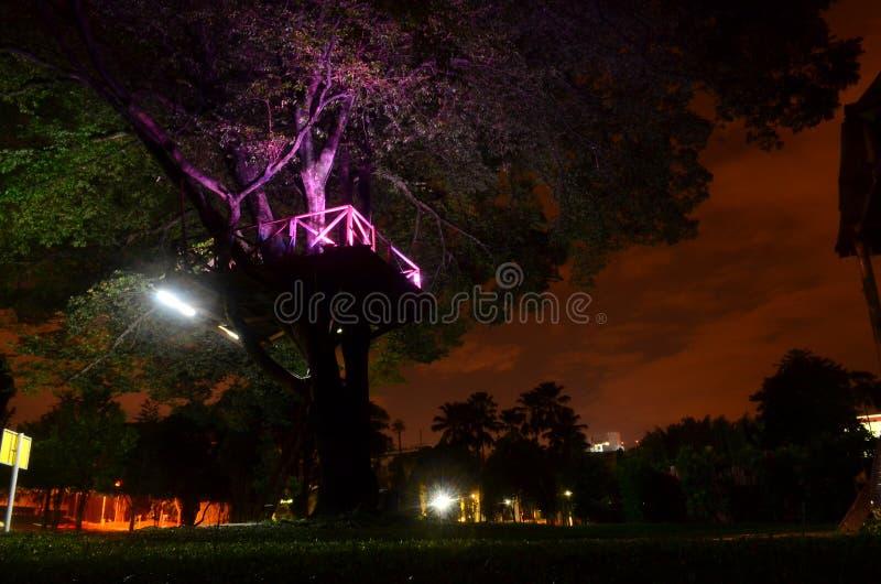 Fotografia di notte della casa sull'albero fotografia stock libera da diritti