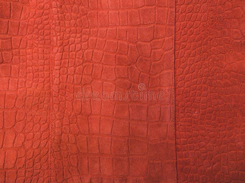 Fotografia di tendenza sul tema dei colori reali per questa stagione - una tonalità dell'arancia immagini stock
