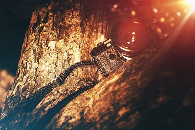 Fotografia di vacanza fotografia stock libera da diritti