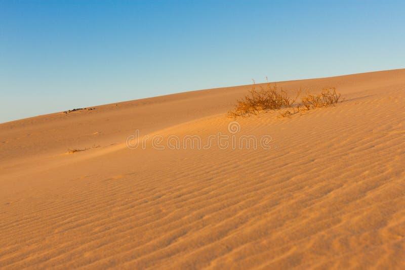 Fotografia dividida em duas porções pela areia e pelo céu Terras e fundo do panorama Ecossistema sustentável Dunas amarelas em fotografia de stock royalty free