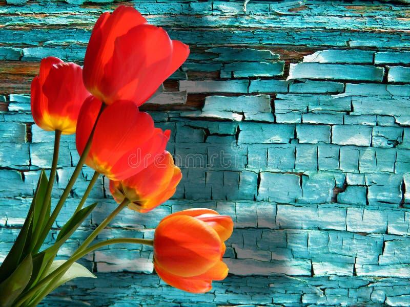 Fotografia do detalhe da cor do campo de grão fresco fotografia de stock