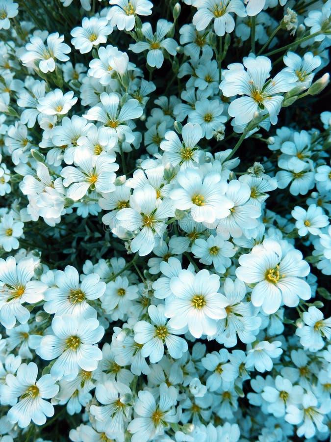 Fotografia do detalhe da cor de flores de florescência bonitas imagens de stock
