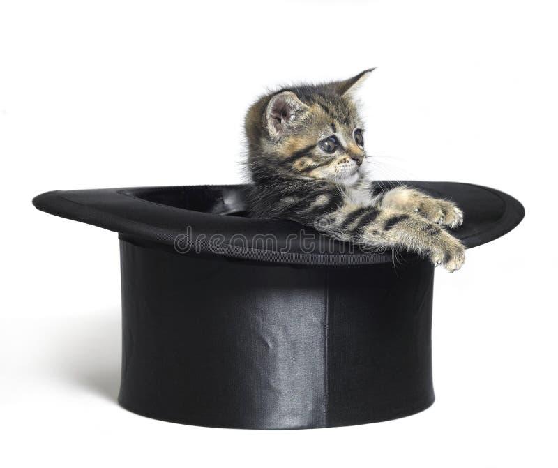 Gatinho bonito que joga em um chapéu alto preto imagens de stock royalty free