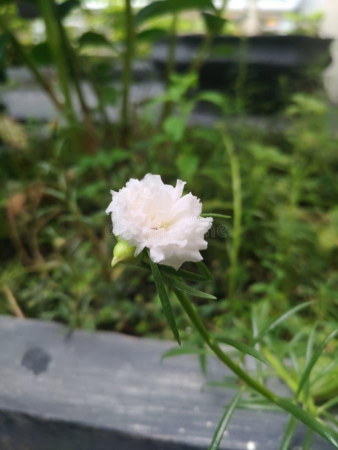 Fotografia do macro da flor foto de stock