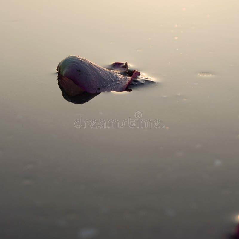 Fotografia do mar da natureza fotografia de stock