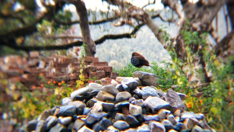 Fotografia do pássaro fotografia de stock royalty free